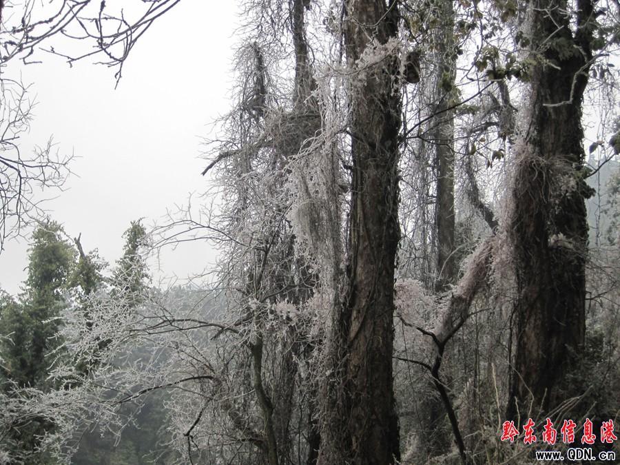 黎平南泉山景区出现雾凇奇观