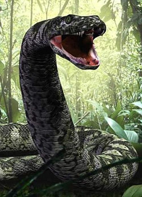其他捕食者也在为着权力而争斗,但泰坦巨蟒无疑是地史上最大的蟒蛇,令