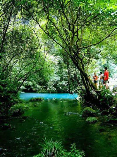 穿过一片浓密的水竹林,你会被眼前的一池水惊呆!图片