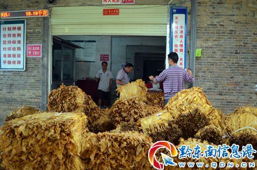 岑巩大力发展烤烟产业实现助农增收财政增效走出新路子