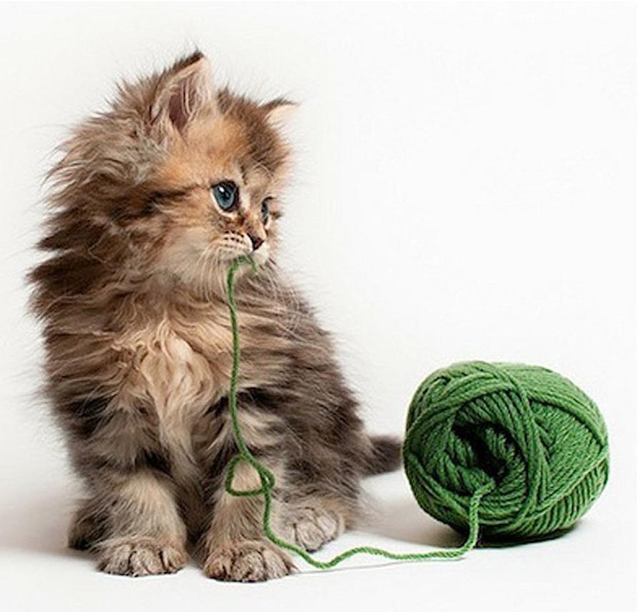 宠物猫趣照走红网络为主人意外增收