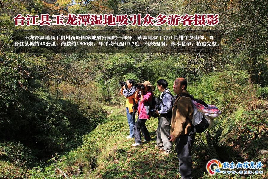 台江县玉龙潭湿地吸引众多摄影爱好者