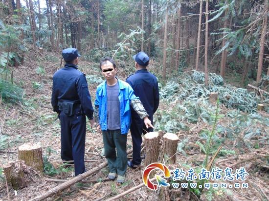 天柱县丛林公安局快速侦破一团伙重恶徒伐林木案