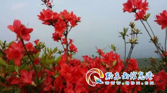 �S平�h警民�(lian)合成功(gong)�(chu)置2起野(ye)生�游锱e�缶�(xian)索