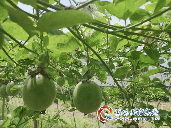 """�S平(ping)�U4天建造一��(dong)房,�<曳Q作用(yong)相(xiang)��于北京的""""小��(tang)山"""""""