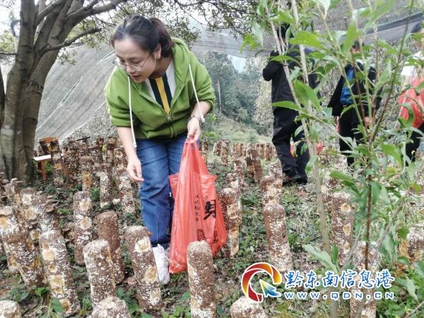 雷山花(hua)菇種植園喜獲豐收