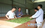 "10畝(mu)""兩(liang)茶""成(cheng)搖錢樹"